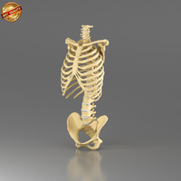 3d model anatomy medical