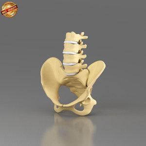 3d model modeled anatomy medical