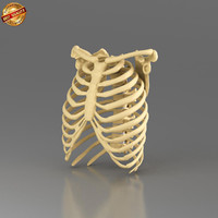 3dsmax anatomy medical