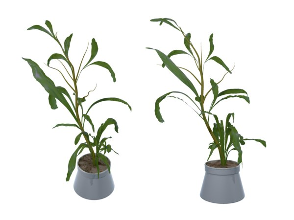 3d fantasy potted tropical plant model