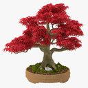 bonsai conifer 3D models