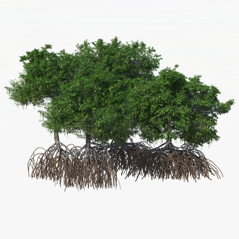 mangrove bushes 3d model