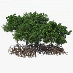 mangrove bushes 3d model