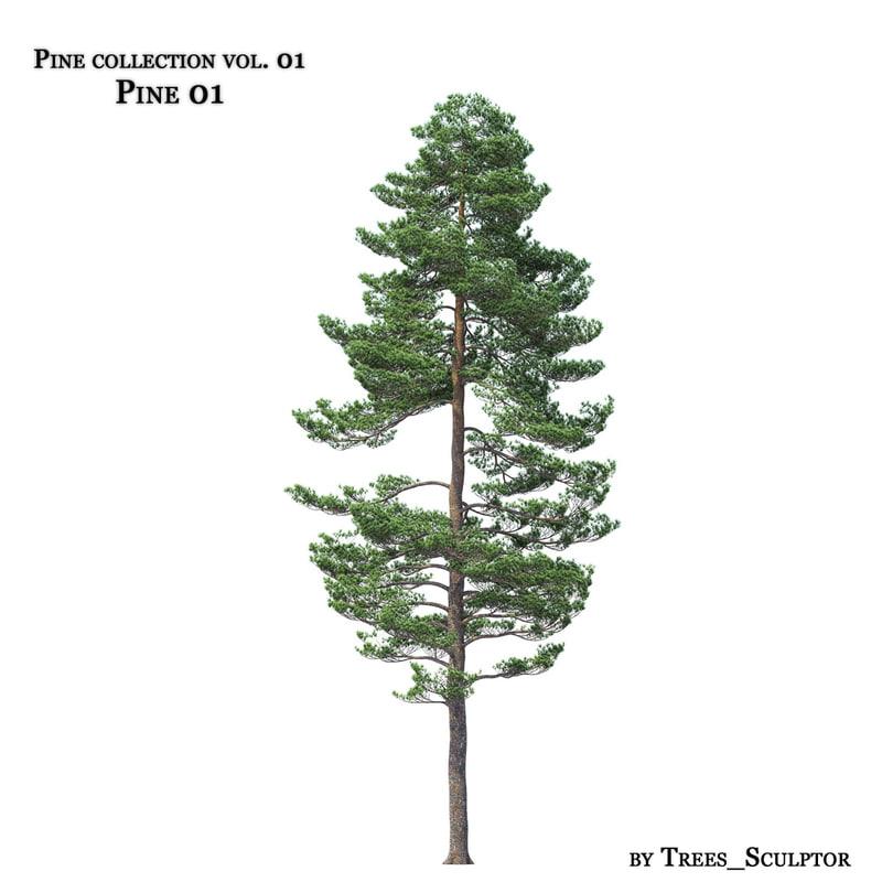 pine-tree tree 3d model