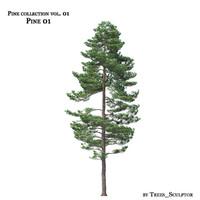 Pine-tree_01