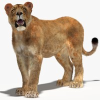 3d lioness rigged fur cat model
