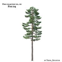 Pine-tree_04