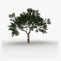 Tree model # 1