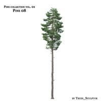 Pine-tree_08
