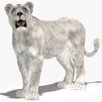 3d lioness white rigged fur model