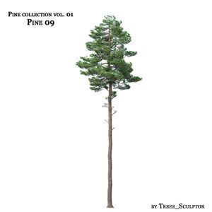 3d pine-tree tree model