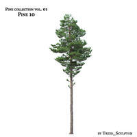 Pine-tree_10