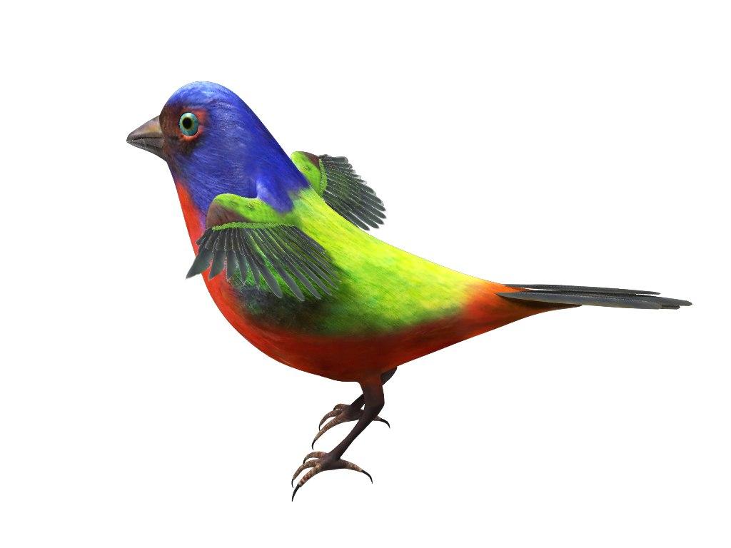 bunting bird 3d model
