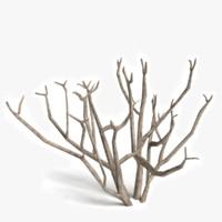 maya dead bush