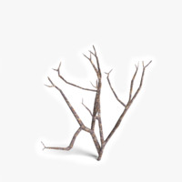 3d model dead plant