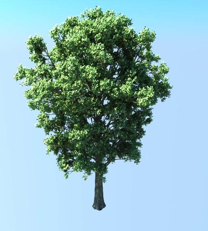 populus tree 3d ma