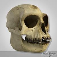 monkey skull scan 3d max
