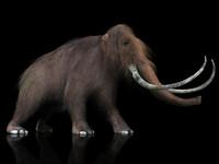 3d mammoth