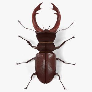 3d model lucanus cervus beetle