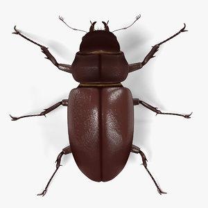 3d lucanus cervus beetle