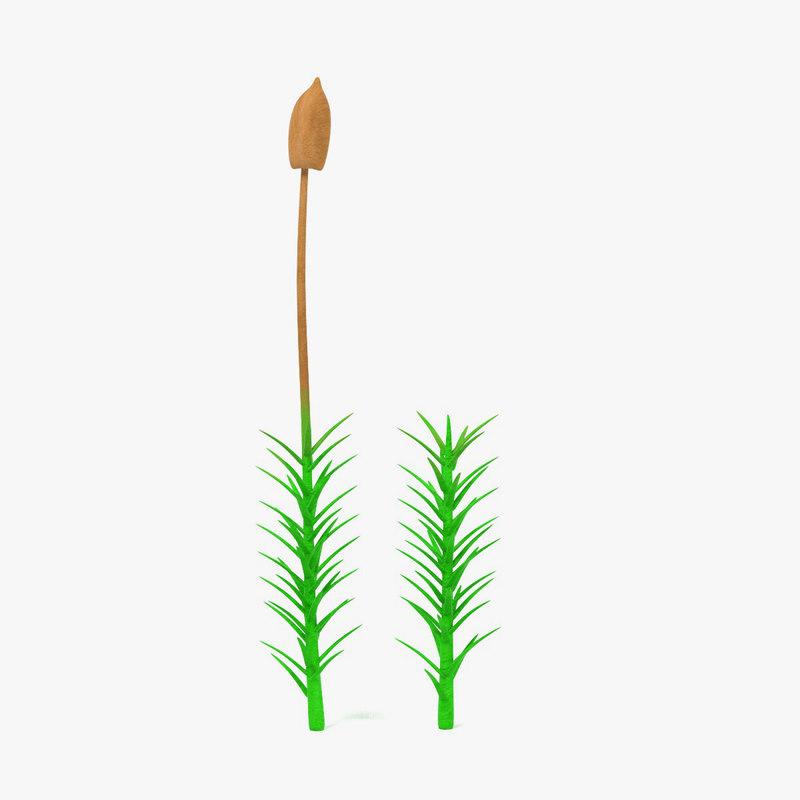moss plant 3ds