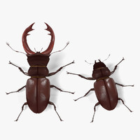 3ds lucanus cervus beetles