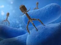 3d bacteriophage virus model