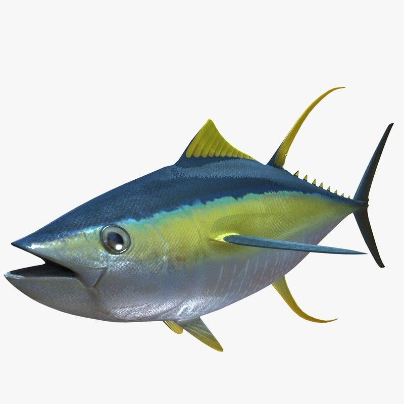 3d tuna fish