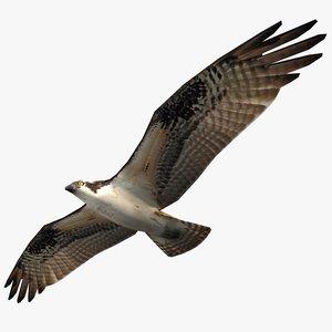 flying osprey 3d model