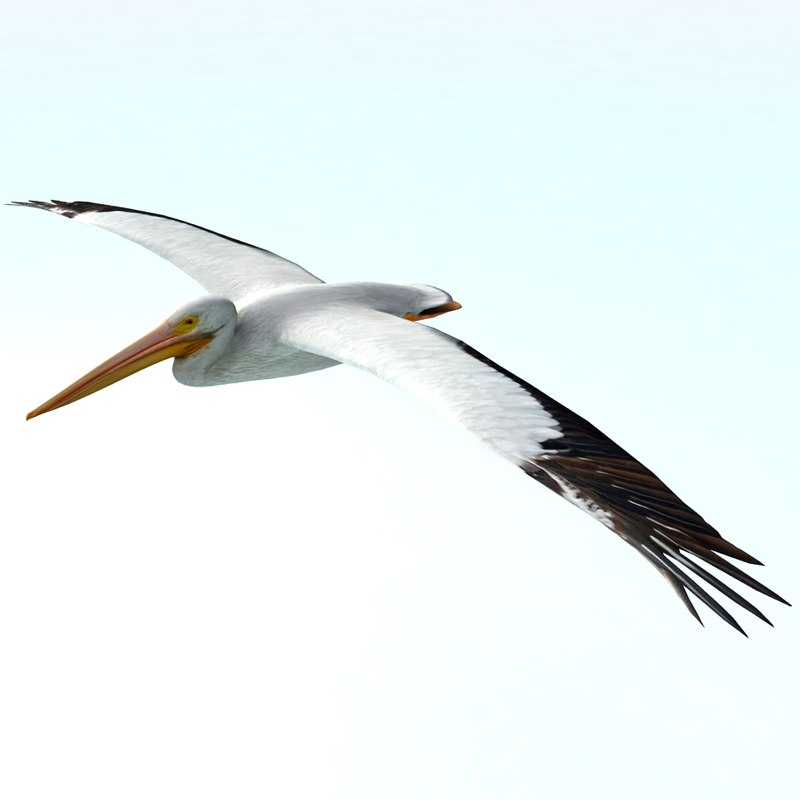 pelican flying 3ds