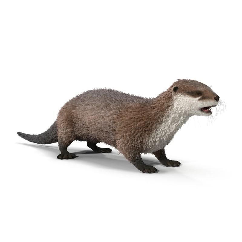3d model otter fur