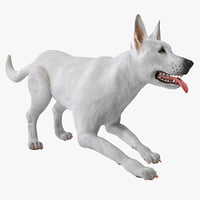 White Shepherd Dog Pose 3