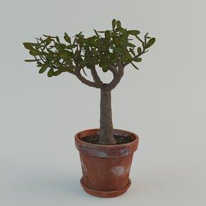 3d model small tree plant pot
