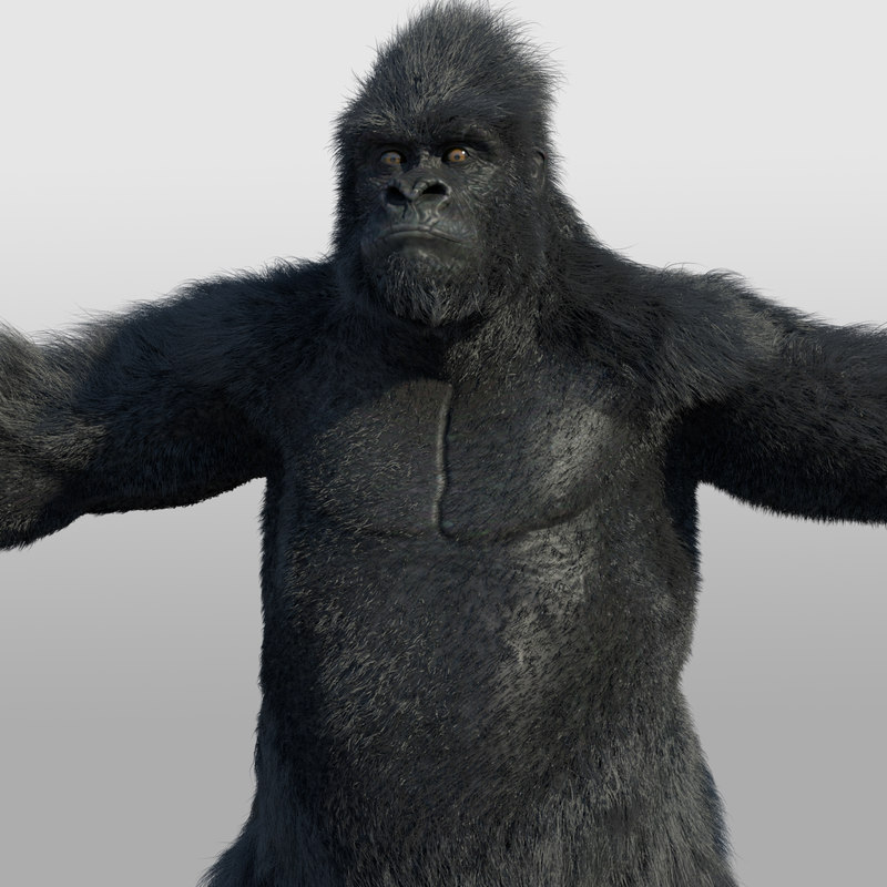 3d ape primate gorilla model