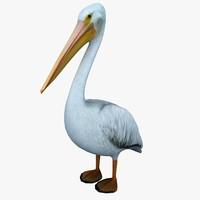 pelican standing 3d model