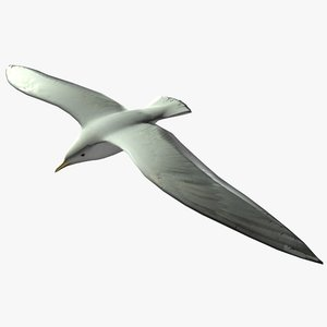 3dsmax seagull gull sea