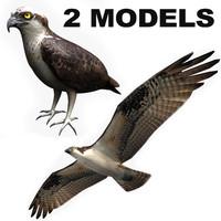 3d model 2 osprey