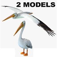 3d model of pelican