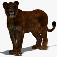 lioness black rigged fur 3d max