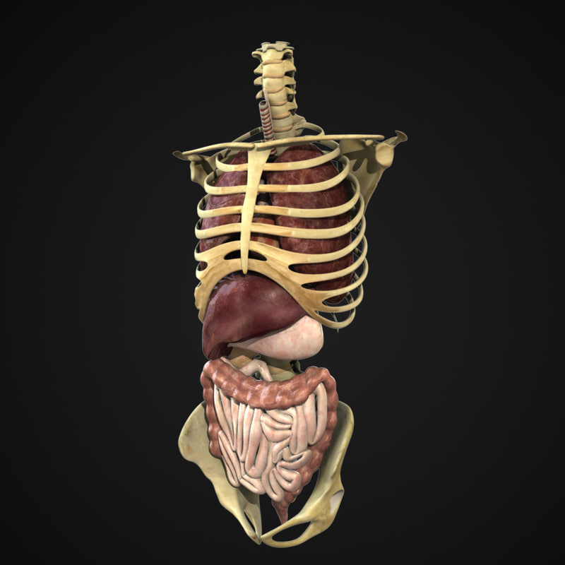 Strong Muscular Male Rigged body 3D model animated
