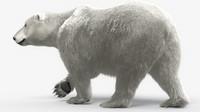 Bear_Polar_maya