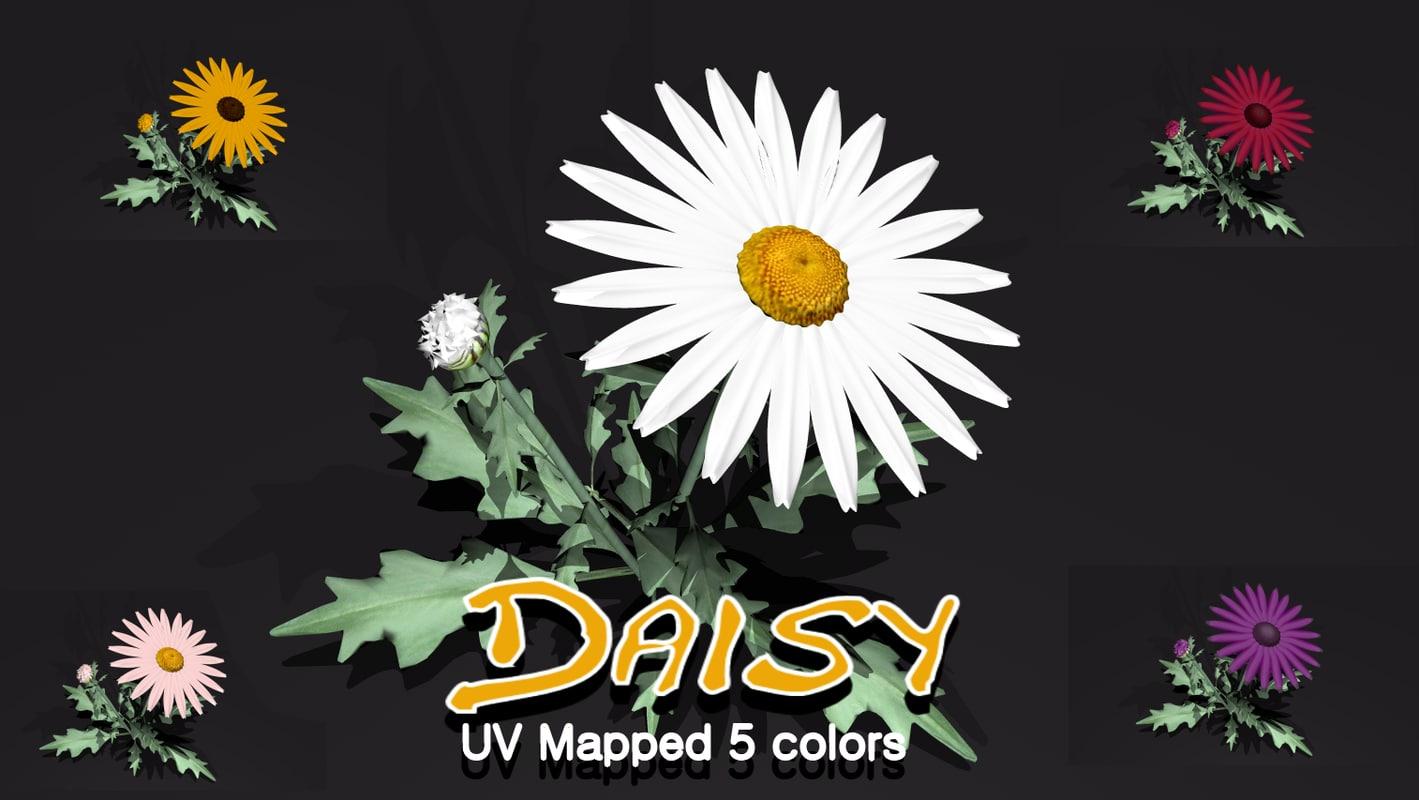 3d model daisy