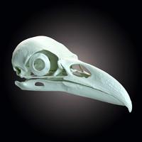 Raven skull scan