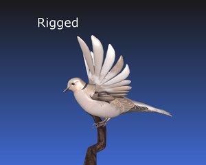 blender asian dove