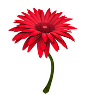 gerbera modeled 3d model