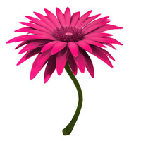 gerbera modeled 3d obj