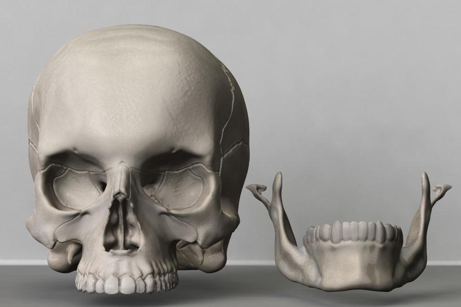 3d model skull zbrush
