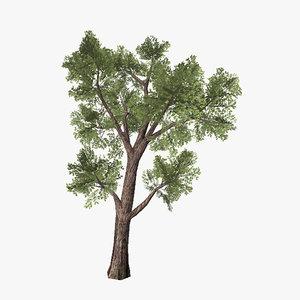 3d model tree 08
