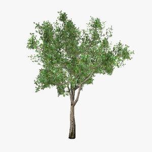 3d tree 02 model