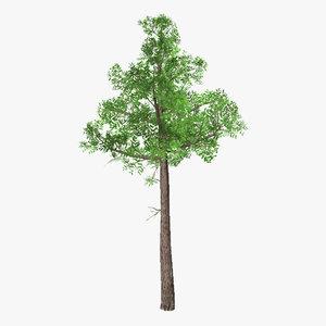 3d tree 05